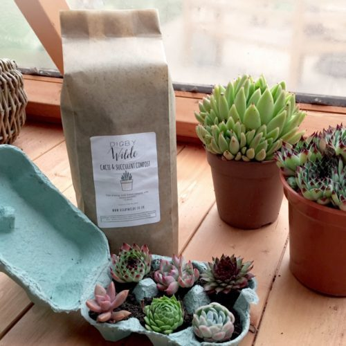 Product-Cacti-and-succulent_LARGE-min